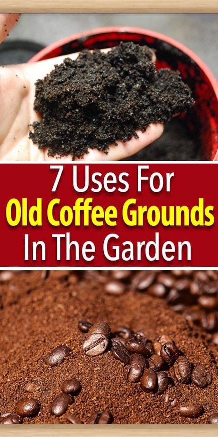 Wie Man Kaffeesatz Im Garten Benutzt Benutzt Garten Kaffeesatz Man Wie Https Organic Agriculturco Cf P 24225 Kaffeesatz Garten Kaffee