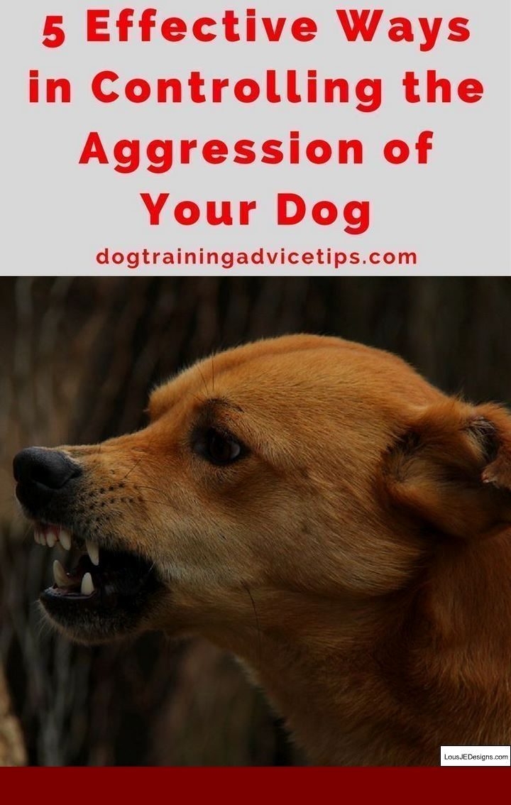 Senior Dog Training Tips And Pics Of Teaching Your Dog To Stay Off