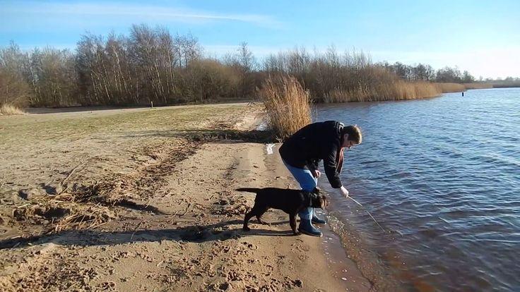 Grappige Labrador pup Dexter voor het eerst bij het water(cute dog Dexter)