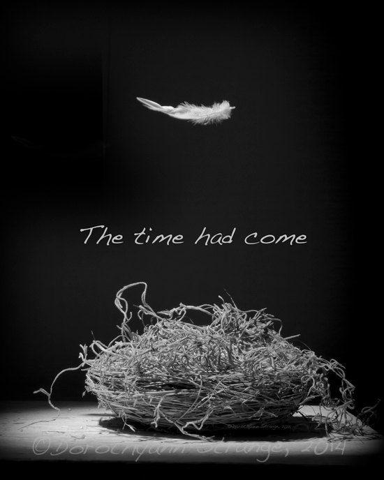 Empty nest black and white art photography by RightOnStrange, $4.00