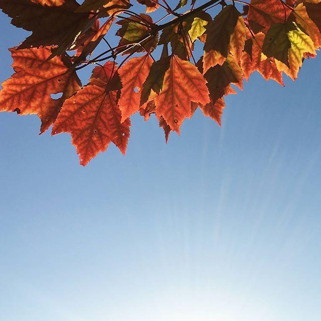 Demain sonne la cloche de l'Equinoxe d'automne et la célébration païenne Mabon, synonyme d'introspection et de retour à soi. 🍁🍂 Le jour est aujourd'hui de la même durée que la nuit, qui prendra petit à petit une place grandissante en attendant l'hiver. Nous sommes donc dans une phase d'équilibre, d'acceptation, de deuil et de guérison. Il est important que tu retrouves cet équilibre en toi. Accueille ta lumière et tes parts d'ombres, ton féminin et ton masculin, l'action et l'inaction, la…