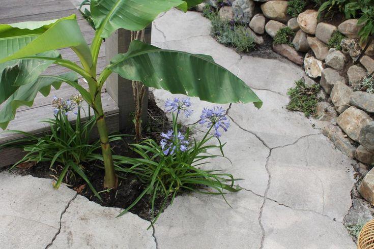 Australische tuin (deel 2) - Eigen Huis en Tuin