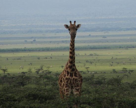 Maasai Mara National Reserve Pictures - Traveler Photos of Maasai ...