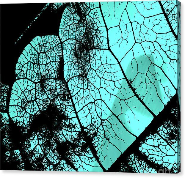 Buy a 24.00 x 20.00 stretched canvas print of Sverre Andreas Fekjan's Aqua leaf…