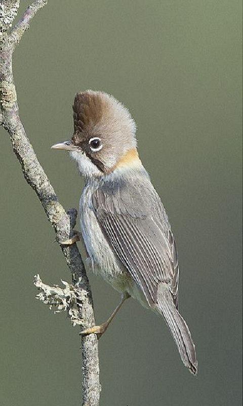photo beautiful bird - 480 x 800 Preview Wallpaper | Phpwscript.com