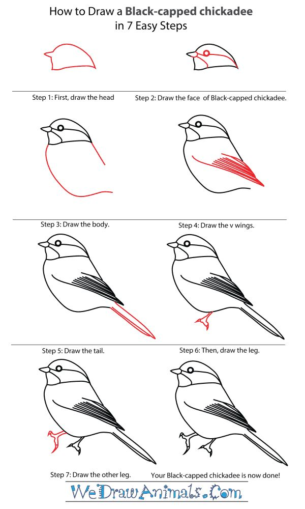 how to draw a chickadee - Google Search