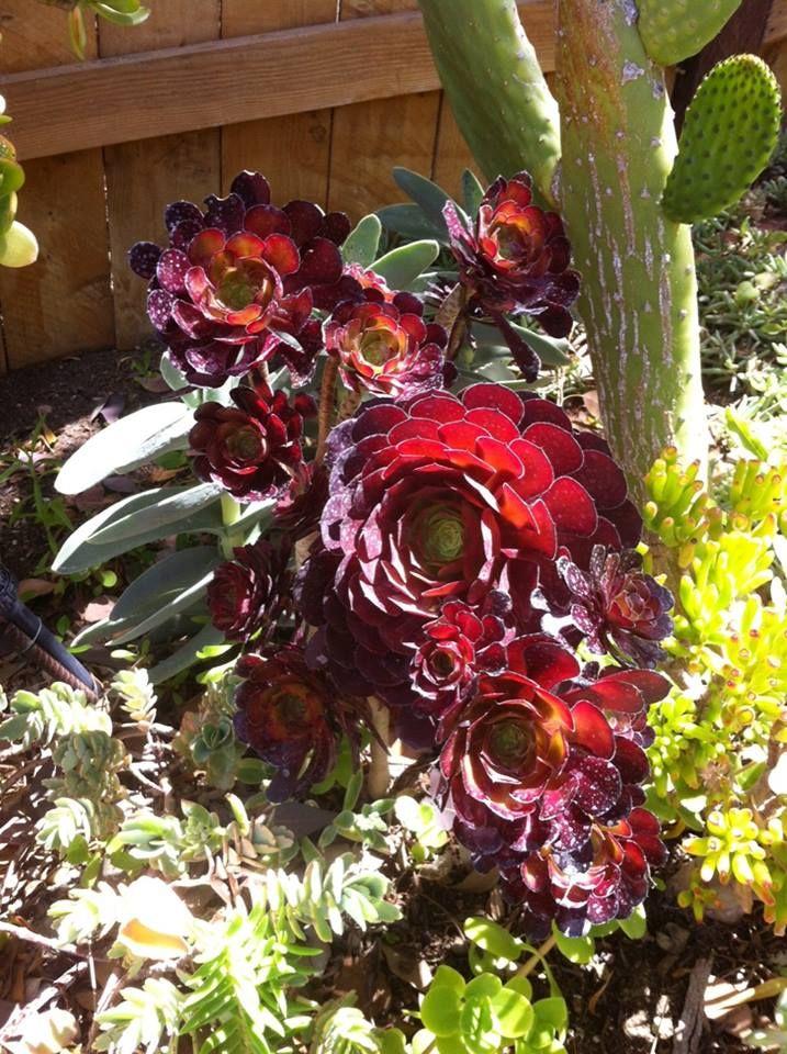 1000 images about cool succulents on pinterest succulents succulent plants and succulents garden - Cool succulent plants ...