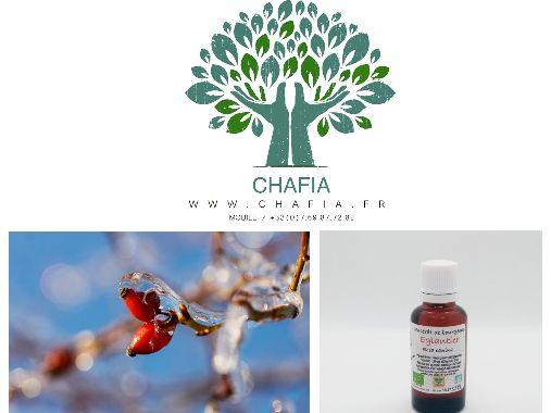 Vente de produits bio en gemmothérapie (bourgeons de plantes), produits en France. #boutique #chafia #produitsbio #phytotherapie #medecinealternative