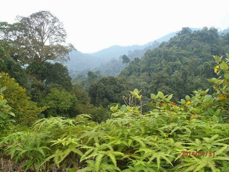 Bukit Tigapuluh National Park Rain Forest