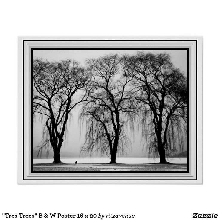 Tres trees b w poster 16 x 20