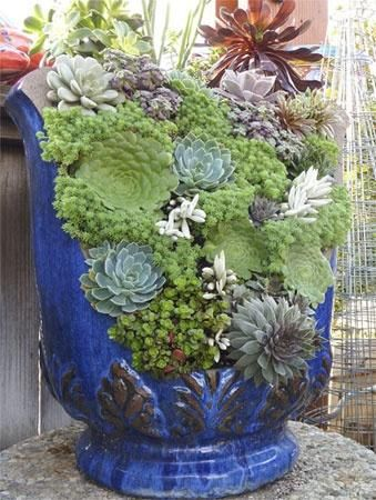 Great use for a broken container- the blue of the container really makes the succulents pop!