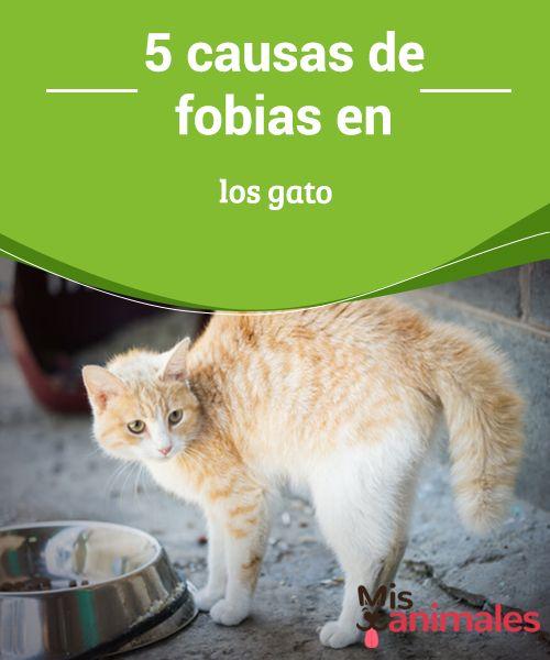 5 #causas de fobias en los #gato  Quien tiene un #minino sabe lo sensibles que pueden llegar a ser estos animales a situaciones que modifican su rutina diaria. Desde los ruidos poco habituales hasta el cambio de lugar de los muebles, te contamos cuáles son las principales causas de #fobias en los gatos y cómo intentar solucionar este problema.