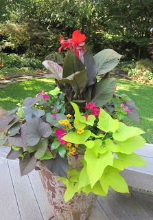 BEST site for container plant combo suggestions & pics... for HOT climates!! (based in Texas but similar plants as Phoenix). Lists warm weather and cool weather combos; sun and shade.