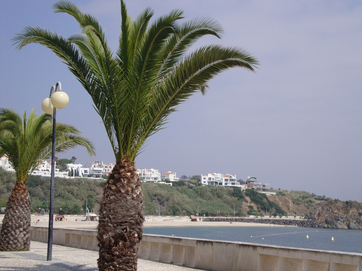 Palm tree lined boardwalk at Praia de Sines, Portugal