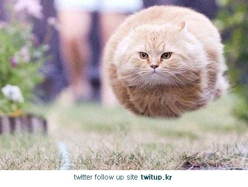 cat !! Ha ha