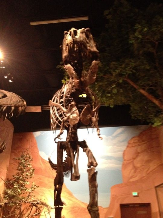 Located at Thanksgiving Point in Lehi, the  is the world's largest collection of mounted dinosaur skeletons, exhibiting more than 60 mounted dinosaur specimens and thousands of ancient fossils. The museum also features a six story 70 mm movie screen and theater, featuring a variety of 3D movies and other specialty films. Fifty interactive, hands-on displays within the exhibit halls are designed to immerse guests in the subject matter, using expansive murals, soundtracks, plants and real…