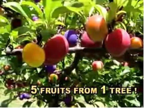 fruit salad tree fresh fruit salad