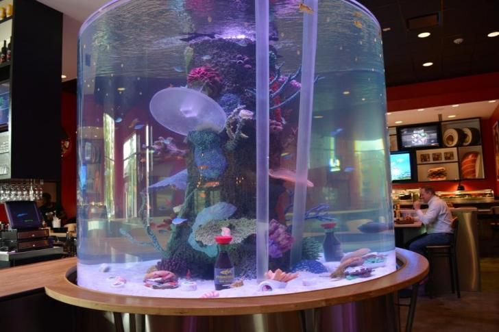 The cowfish 39 s crazy fish tank out and about at for Crazy fish restaurant