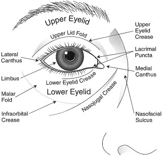 Eye drawing diagram schematic wiring diagram 113 best eyes images on pinterest eyes evil eye and human eye rh pinterest com human eye diagram drawing eye drawing with labels ccuart Gallery