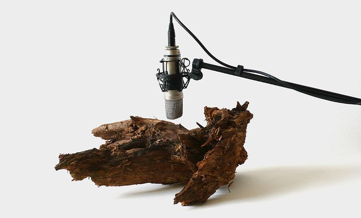 Zimoun / 25 woodworms, wood, microphone, sound system 2009
