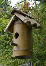 Bamboo for Birds                                                                                                                                                                                 Mais