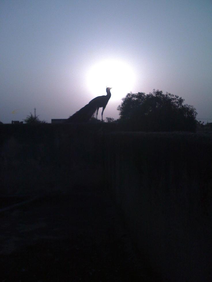 Beautiful Rajasthan - India