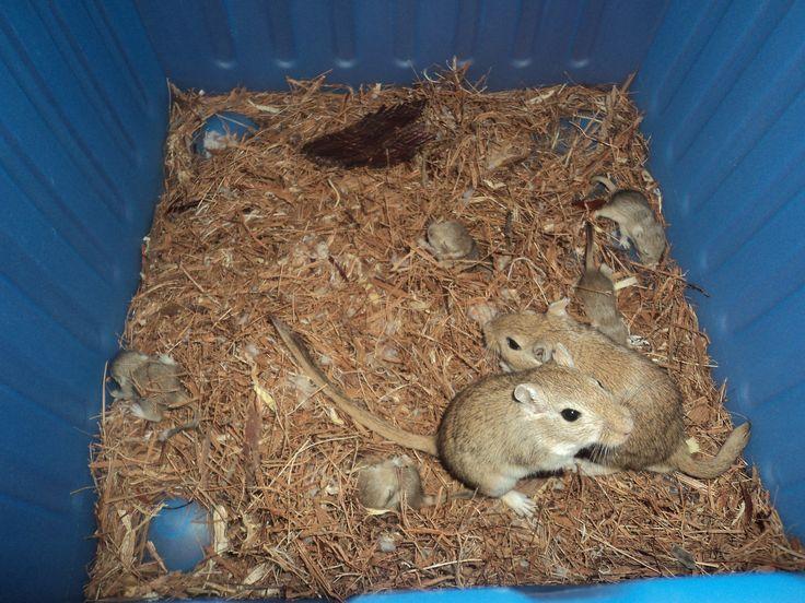 Cala (madre) y Johnny (padre) cuidan de sus crias, de las que solo viven un 60% de ellas.