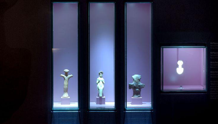 Raccogliere per stupire, raccogliere per studiare, Sala Giancarlo Ligabue , Museo Storia Naturale, Venezia
