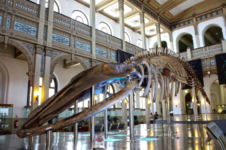 Museo de Historia Natural, Santiago.