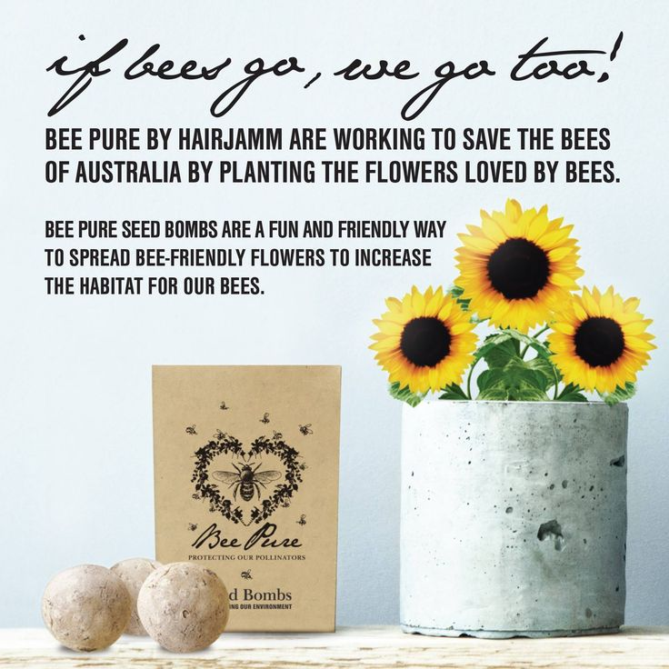 Save the bees with Bee Pure!