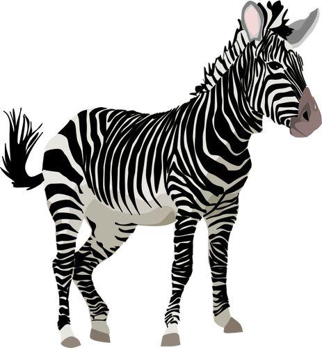 Vector Graphics Of Color Zebra Animal Public Domain