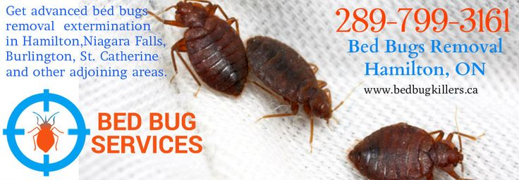 Bed Bugs Removal Extermination Hamilton