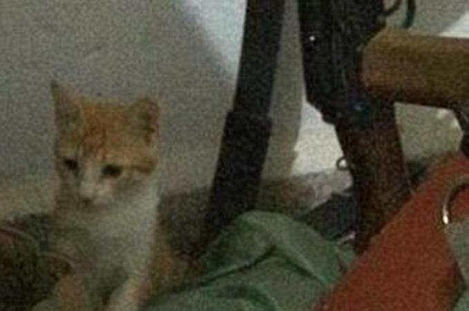 NON CI POSSO CREDERE !!!!L'Isis approva una legge anti gatto: nel Califfato parte lo sterminio - La Stampa  QUESTA E' UNA VERGOGNA!