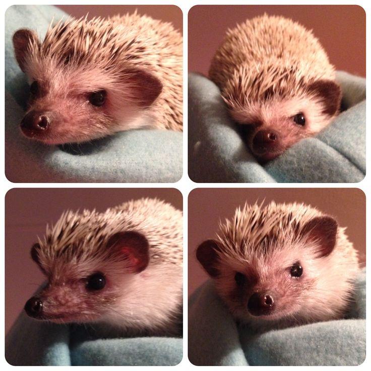 Výrazy našeho ježka :)