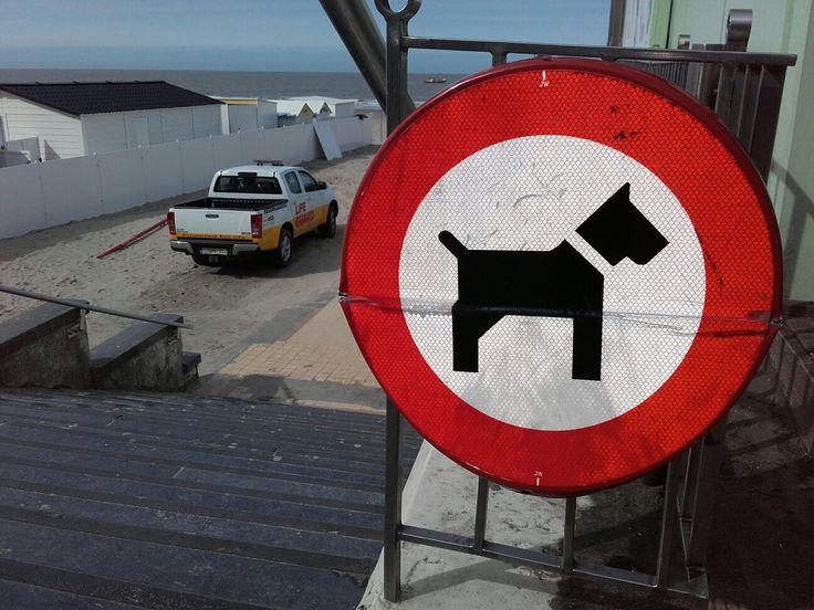 Vanaf het paasverlof zijn honden en paarden op het strand opnieuw verboden. Denk er dus aan als u met uw favoriete viervoeter op stap bent. Honden mogen wel op het strand vanaf het begin van de duinen richting Zeebrugge, of het begin van het staketsel richting Wenduine. Maar ze moeten daar steeds aan de leiband. Dit verbod geldt tot en met 15 september.