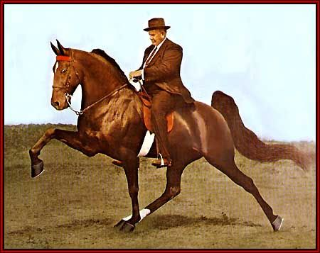 Best 25+ Tennessee walking horse ideas that you will like ...