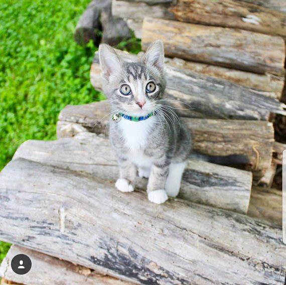 Cat Collar-Breakaway Cat Collar-Plaid Cat Collar-Boy Cat