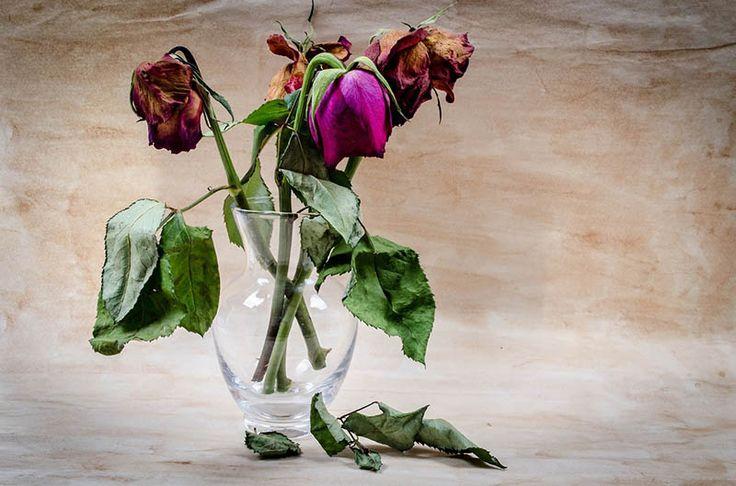 Rodzina: Jak przeżywamy czas żałoby - http://kobieta.guru/jak-przezywamy-czas-zaloby/ - Żałoba jest naturalnym stanem po stracie. Co ważne, nie dotyczy tylko śmierci, ale każdej utraty, na przykład rozpadu związku czy chociażby wyjazdu za granicę.   Przez tożsame etapy przechodzą także osoby i bliscy tych, u których zdiagnozowano poważne choroby. Niekiedy musimy pożegnać się też z jakąś wizją bądź czymś, co nadawało