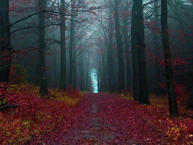 The black forest, Germany ( el bosque negro, Alemania).