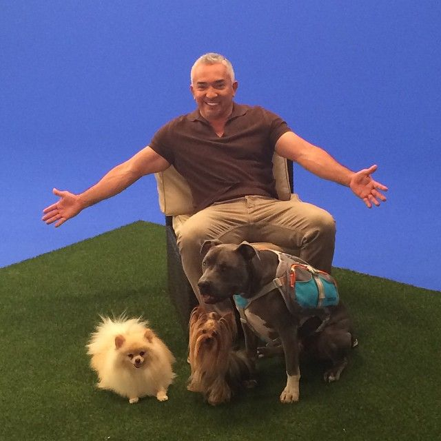 Dog Whisperer With Cesar Millan Pack Leaders In Training