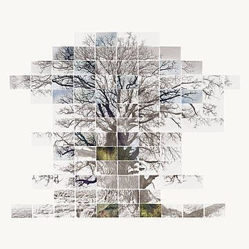 Noel Myles, Sketch Film of a Tree, 2013 / 2013 © eu.lumas.com/ #Lumas