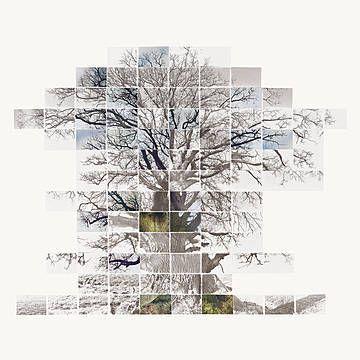 Noel Myles - Sketch Film of a Tree