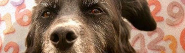 El mito de la edad de los perros: cómo calcularla de forma veraz