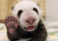 Panda Cam to put on if they are working quietly.