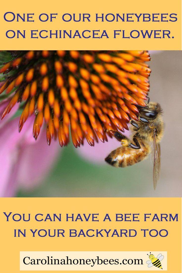 225 best save our pollinators images on pinterest backyard