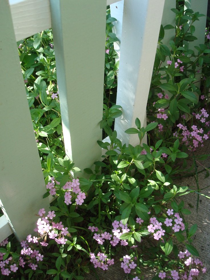 'Pick-it' Fence Blossoms