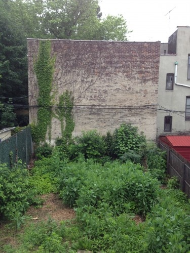Brooklyn's Baggage: Soil Contamination in our own Backyards