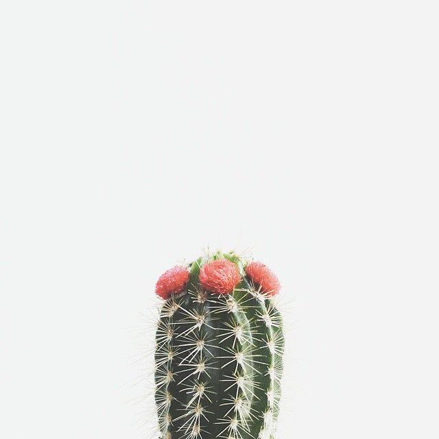 ✚ ✚ ✚ via @plantenfestijn on Instagram http://ift.tt/1GEW8q6