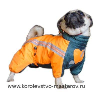 Зимний комбинезон для собаки породы мопс