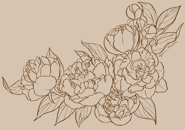 Black and White peony Graphics | Recent Pieces (2011)